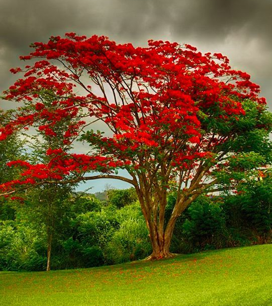 Color my world…red